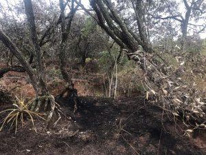 Usina é multada em R$ 189 mil por incêndio em lavoura de cana e mata nativa