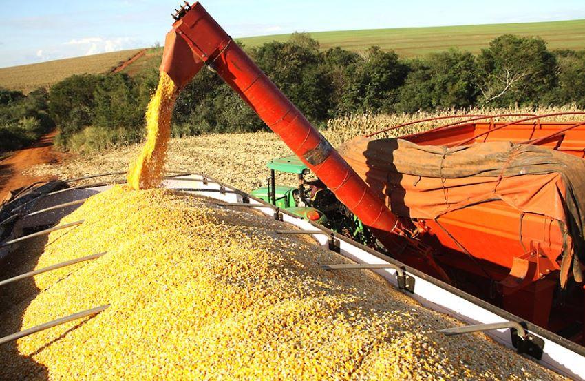 Aprosoja revisa a produtividade do milho segunda safra no Estado