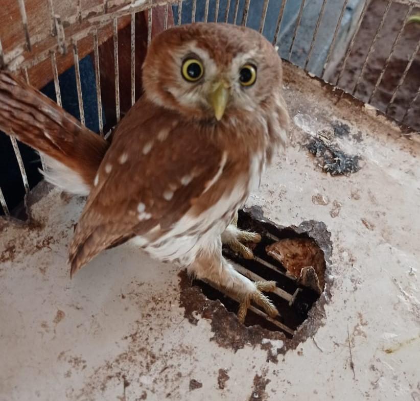 PMA apreende madeira ilegal e até coruja em MS