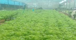 Ações de incentivo são desenvolvidas á produção de alimentos