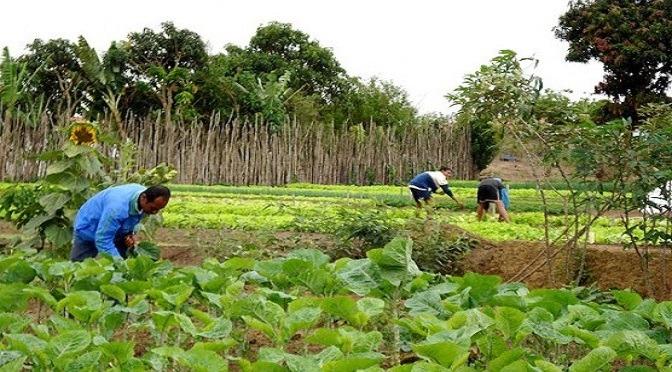 Covid-19: pequenos e médios agricultores têm linha de crédito especial