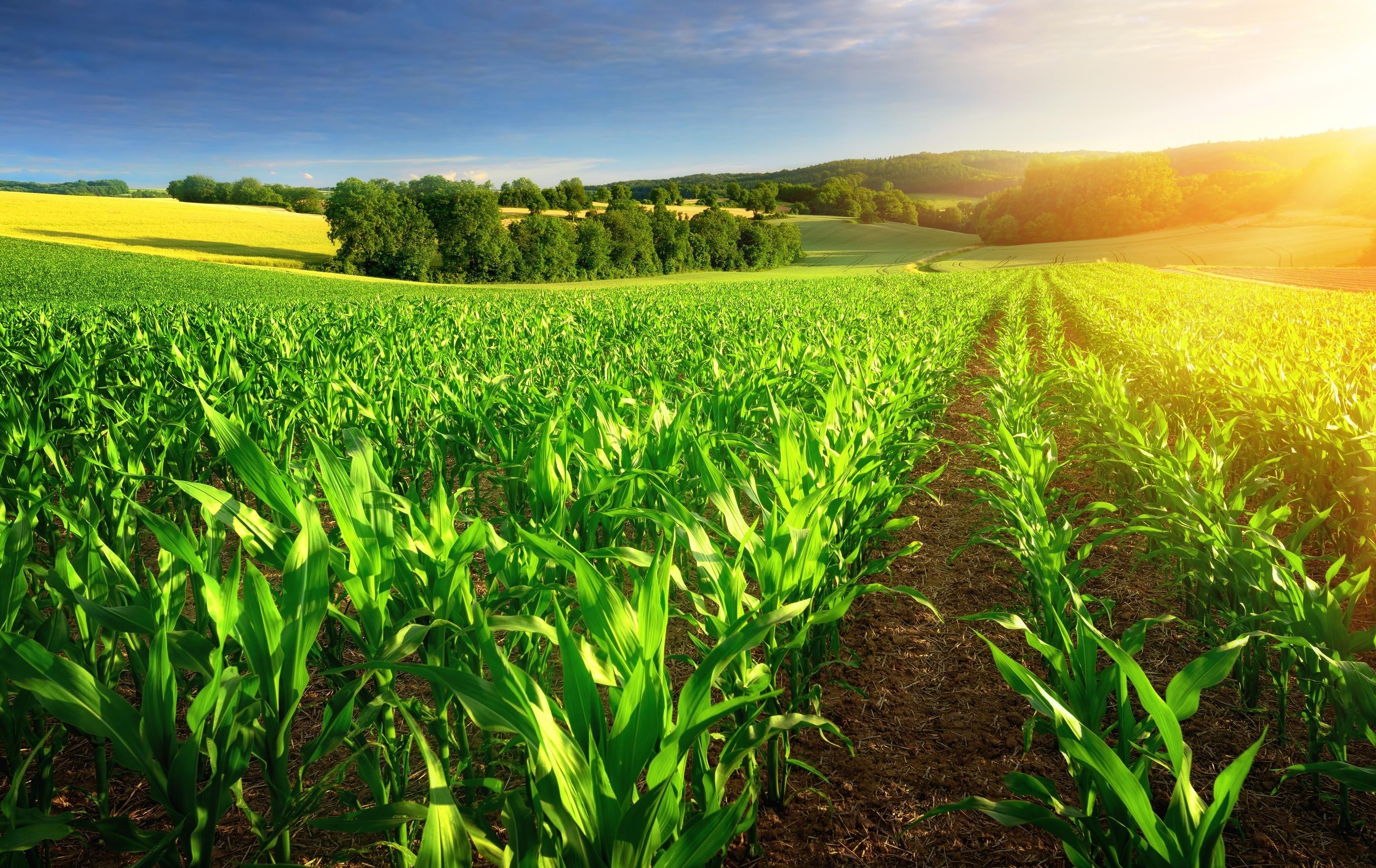 Produtores têm até hoje para aderir ao Refis Rural