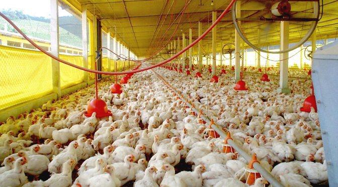 Exportações de celulose, soja e carne de aves crescem no 1º quadrimestre em MS