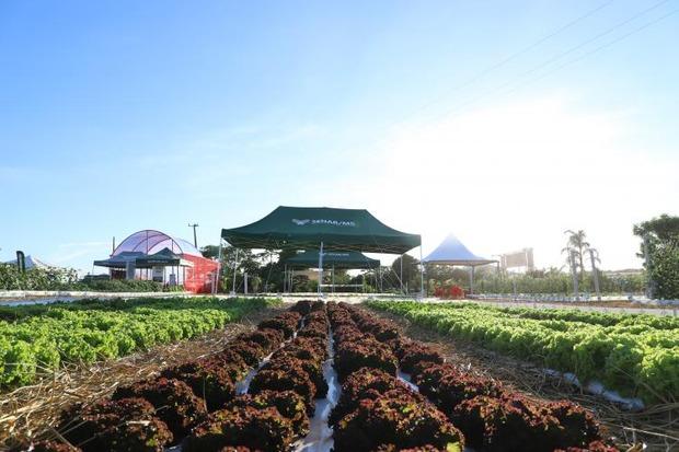 Hortas sustentáveis: ferramentas de baixo custo e com retorno rápido otimizam resultados na propriedade