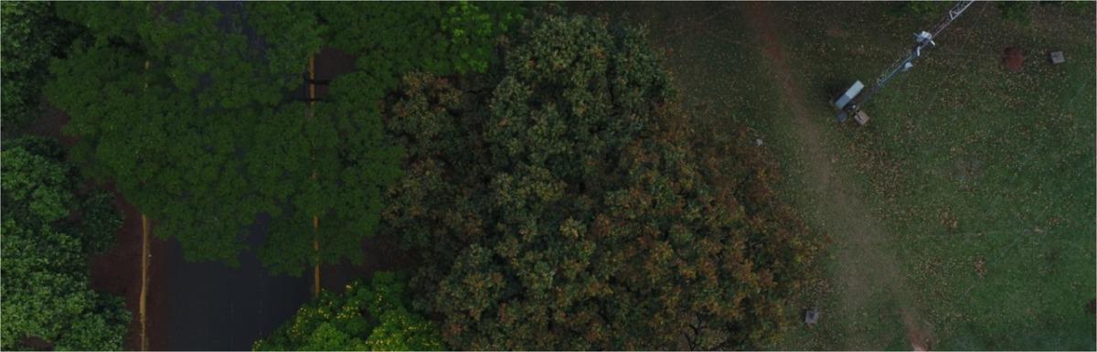 Pesquisadores mapeiam vegetação nativa em Mato Grosso do Sul