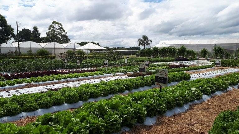 Agricultura Familiar: Campo Grande será pioneira em implantação de projeto de Inovação Tecnológica