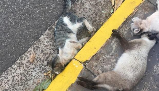 Idosa de 83 anos mata 4 filhotes de gato à pauladas e via para delegacia