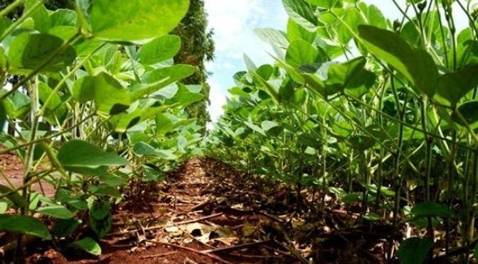 Clima é favorável para safra de soja em Mato Grosso do Sul